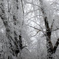 В зимнем наряде...2 :: Тамара (st.tamara)