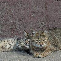 Мама и ее котёнок :: Вячеслав Макаров