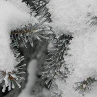 зимний этюд :: Igor Osh