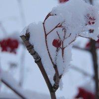 зима... :: Екатерина ...