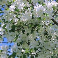 Скоро весна! :: Михаил Лобов (drakonmick)