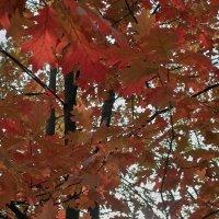 Узор листвы :: Андрий Майковский