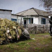 Домик настоящего рыбака :: Вадим Куликов