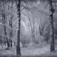 Снегопад :: Nina Streapan