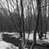 IMG_7666 - Черная речка :: Андрей Лукьянов