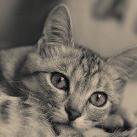 У котауси были большие глазауси... :: Елена Ел