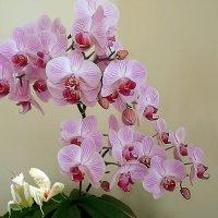 """""""Орхидея и Богомол"""" :: Aleks Ben Israel"""