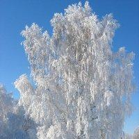 В зимнем наряде :: Геннадий Ячменев