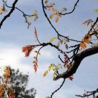 Прощанье с осенью :: Наталья Джикидзе (Берёзина)