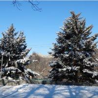 Зимний день в начале декабря... :: Тамара (st.tamara)