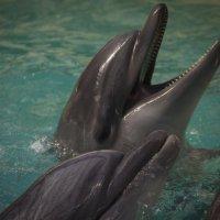 дельфины :: Юлия Белакова
