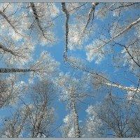 """Зимнее... Из цикла """"Берёзовое небо"""" :: Olenka"""