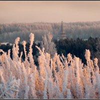 Морозный день :: Валерий Талашов