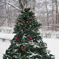 Дед Мороз, ты бы снега б нам принес.......... :: Tatiana Markova