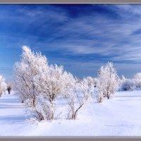 Зима. :: Алексей Хаустов
