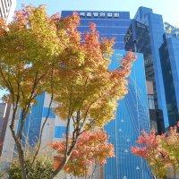 Осень в Сеуле. :: София