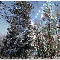 Волшебный Новый Год...2 :: Тамара (st.tamara)