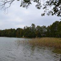 У озера. :: zoja