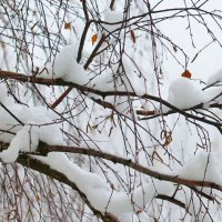 Где ты - зима пушистая? :: Nikolay Monahov