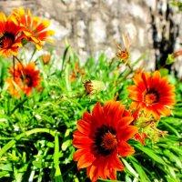 Заморский аленький цветочек :: ирина )))