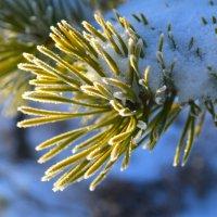 Ледяная зима :: Анастасия Попкова