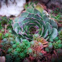 Каменный цветок :: Тетянка Мас