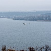 Лебеди над Днепром. Декабрь :: Юрий Афанасьевич .