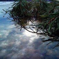 Отражение :: оксана савина