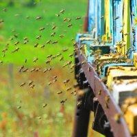 Пчелы :: Константин Филякин