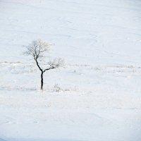Зимний минимализм... :: Константин Филякин