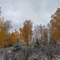 хмурый ноябрь :: Galina