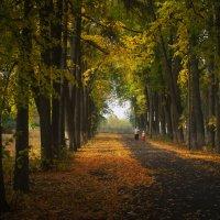 Осеннее настроение... :: Анатолий __