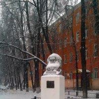 Капитал в снегах :: Алексей Соколов
