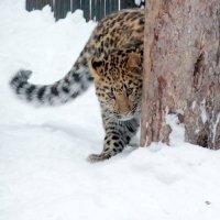 Навыки охоты :: Аркадий