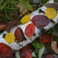 Осенние листья :: Вера Андреева