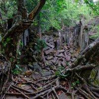 Камбоджа. Храм Та-Пром. XII век. :: Rafael