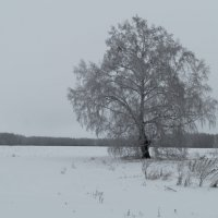Во поле ... :: Алексей Масалов