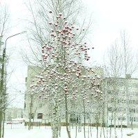 рябиновые бусы в декабре... :: Михаил Жуковский