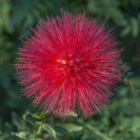 салют в мире цветов :: Dmitriy Sagurov