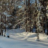 Зимний лес. :: Валерий Молоток