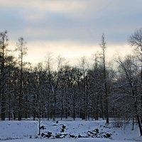 Морозный этюд.... :: Tatiana Markova