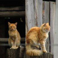 Коты :: Константин Филякин