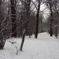 IMG_8178 - Мы много раз в году радуемся снегу :: Андрей Лукьянов