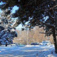 Зимнее утро в городе... :: Тамара (st.tamara)