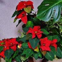 Рождественские звёзды :: Svetlana27