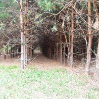Прозрачный лес ... :: Damir Si