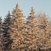 Ёлки 2014 #2 :: Алексей Масалов