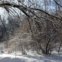 Мороз и солнце...2 :: Тамара (st.tamara)