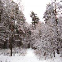 Под утро выпал снег :: Андрей Снегерёв