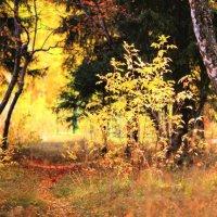 Осенний парк :: Eugene A. Chigrinski